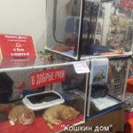 Приют «Кошкин дом» на выставке кошек «Кэт-Салон-Сентябрь» в Сокольниках