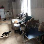 Подмосковный приют обеспечивает больных кошек донорской кровью
