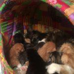 Котята подросли