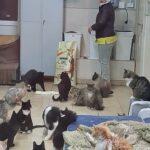 5 мешков корма для кошек уже в приюте
