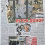 Публикация о приюте в «Экспресс-Газете»